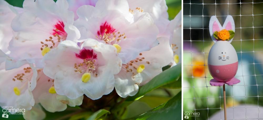 BlossBunn13-02-2