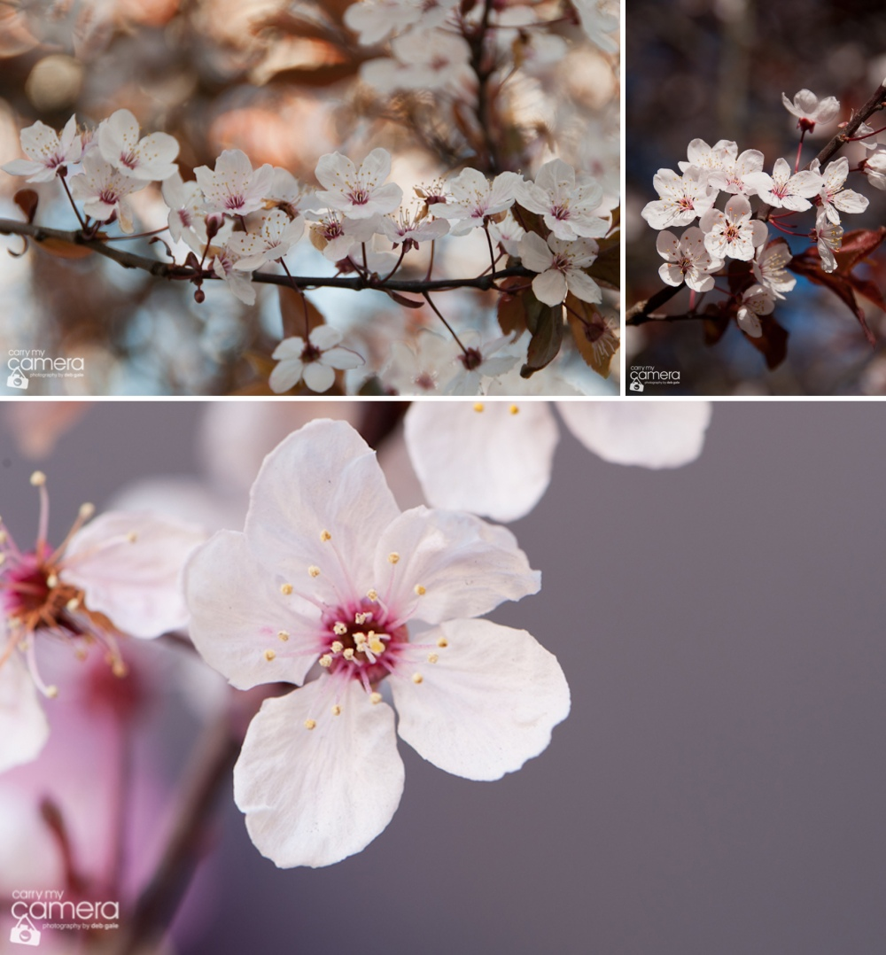BlossBunn13-02-7