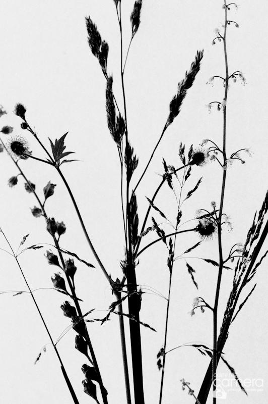 Weeds-06-1