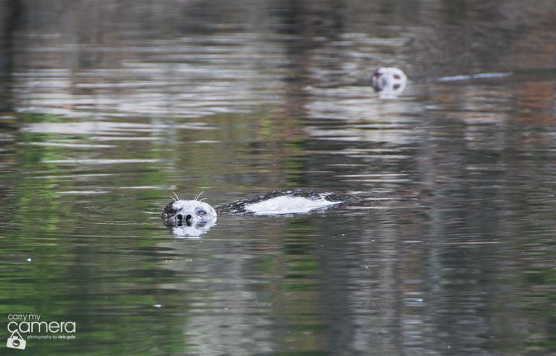 Seals-10