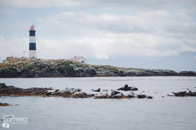 Seals-4