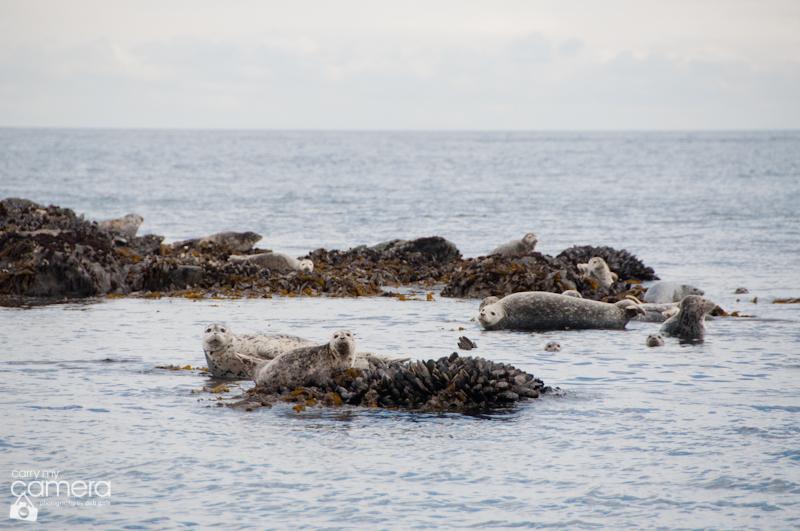 Seals-5