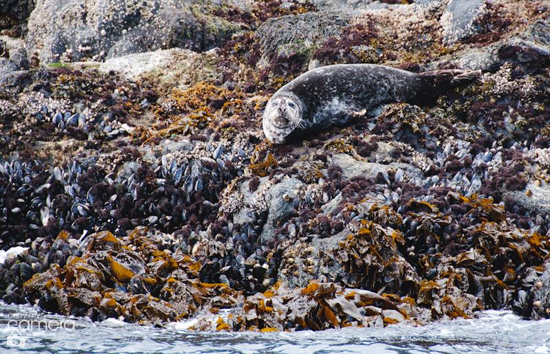 Seals-6