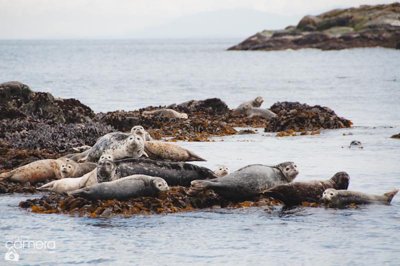 Seals-7