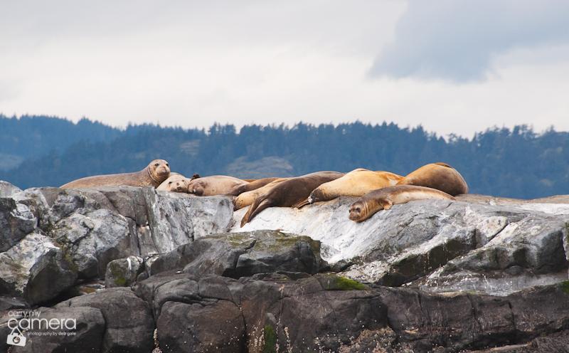 Seals-8