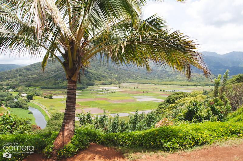 Kauai6