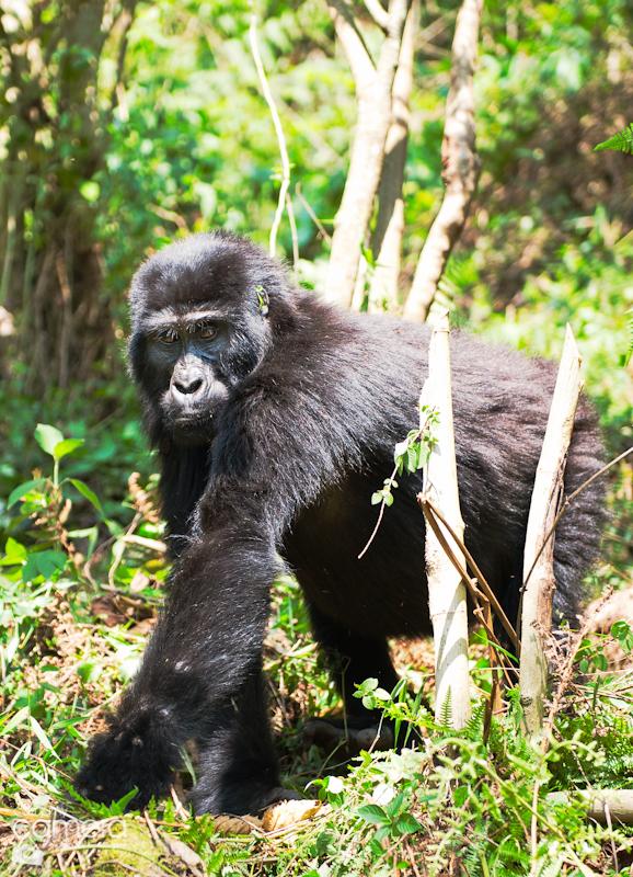 Primates-11