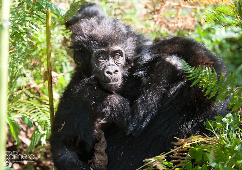 Primates-13