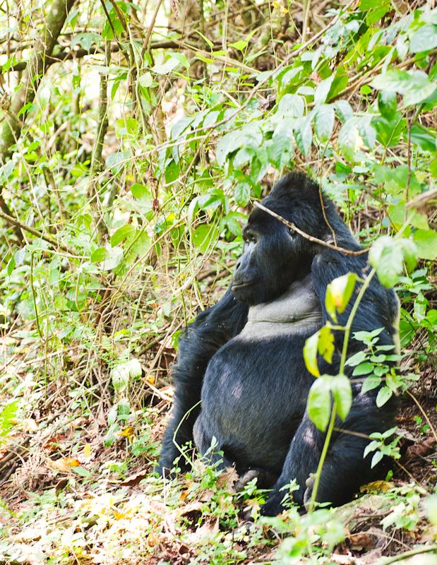 Primates-14
