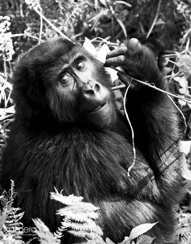 Primates-19