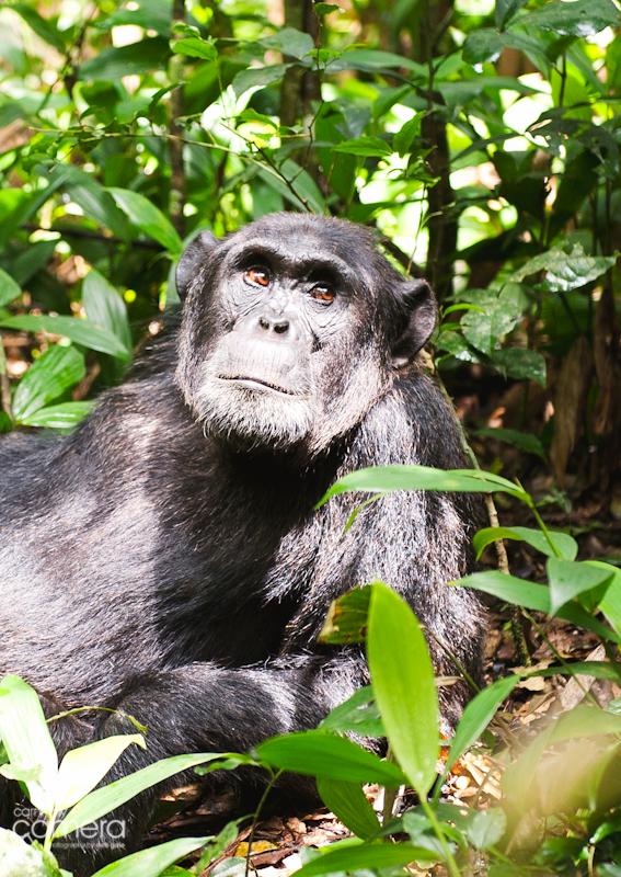 Primates-24
