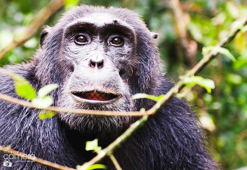 Primates-25