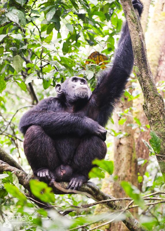 Primates-27