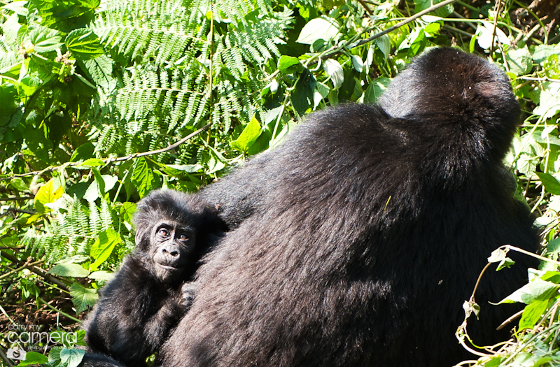 Primates-3