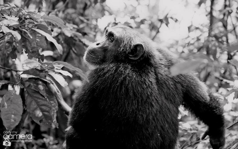 Primates-30