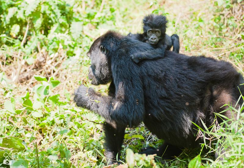 Primates-5