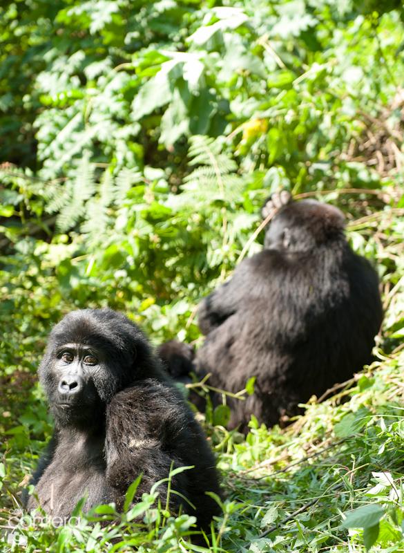 Primates-7