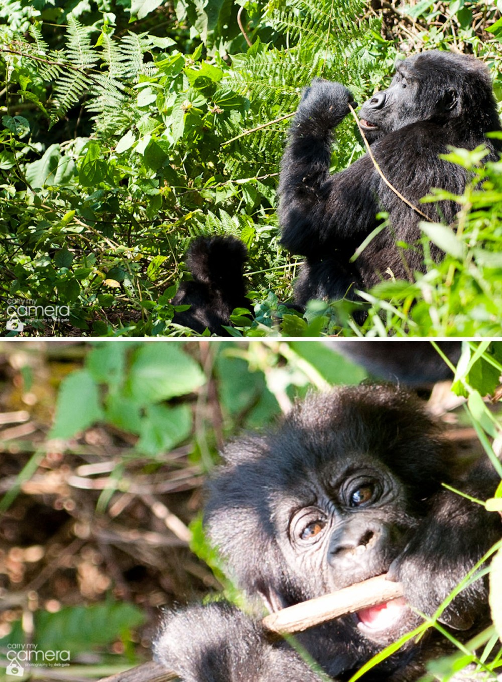 Primates-9 copy