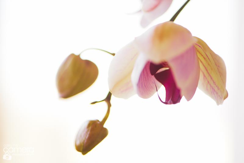 orchids-10