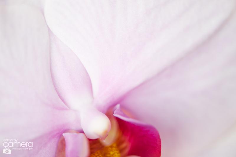 orchids-2