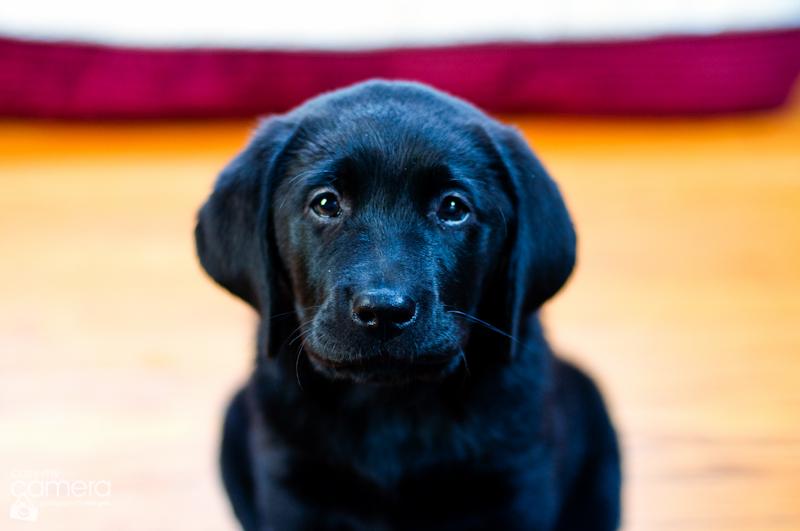 puppy-love-11