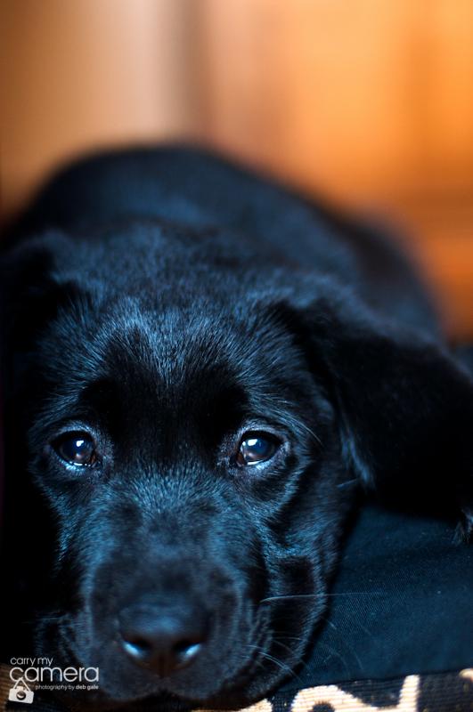 puppy-love-15