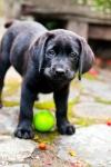 puppy-love-16