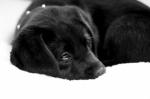 puppy-love-18