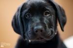 puppy-love-2