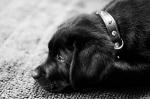 puppy-love-20