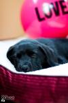 puppy-love-21