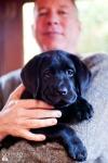 puppy-love-5