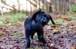 puppy-love-6