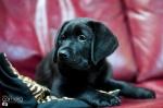puppy-love-8