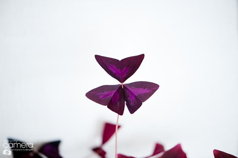loveplant-8-1